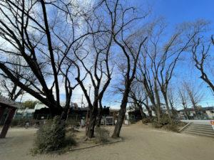 【埼玉県所沢市】小手指公園の保存SL【D51 118】